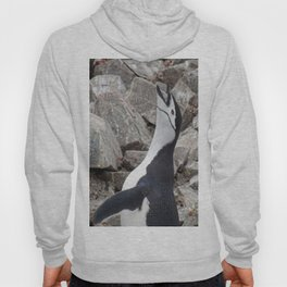 Chinstrap Penguin Calling Hoody