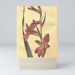 Flower 719 gladiolus segetum Round seeded Corn Flag10 Mini Art Print