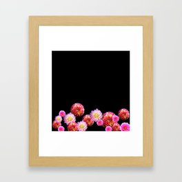 Dahlias on Black Framed Art Print