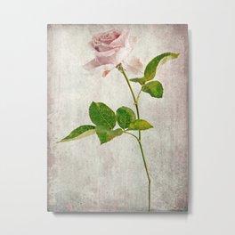 English Tea Rose  Metal Print