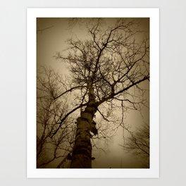 Birch Tree Art Print