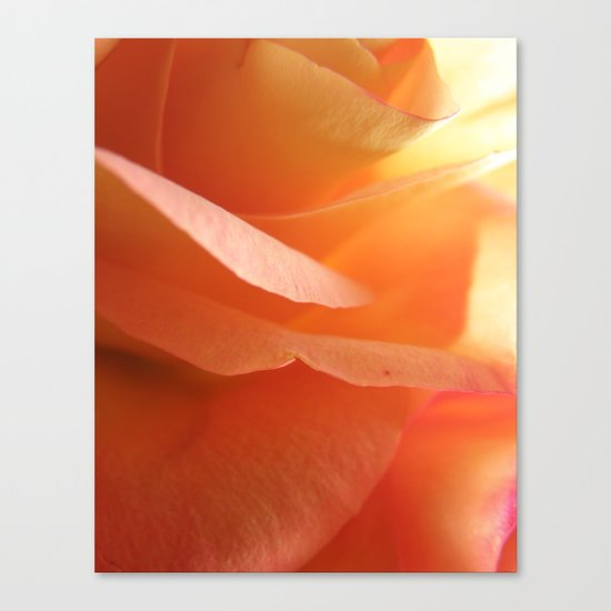 Two-Tone Roses #9 Canvas Print