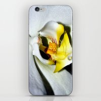 orchid iPhone & iPod Skins featuring orchid by  Agostino Lo Coco