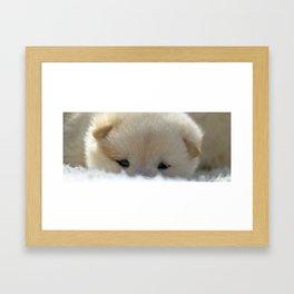 Shiba Inu Puppy Framed Art Print