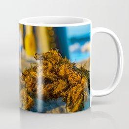 Seaweed at Sunrise Coffee Mug