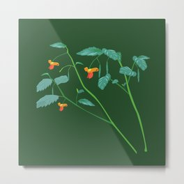 Jewel weed - illustration Metal Print