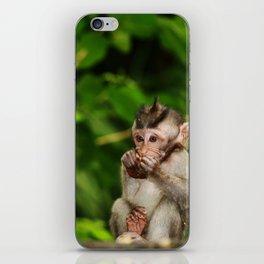 Bali - Baby Monkey Eating iPhone Skin