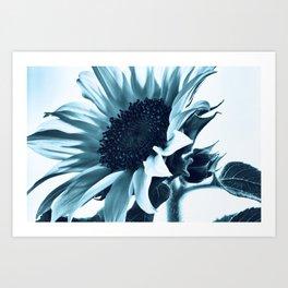 Pastel Blue Sunflower Art Print