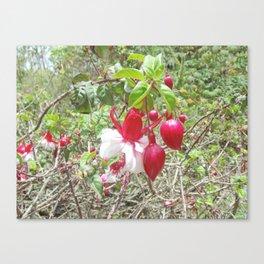 Jardín Botánico de Quito, Cinco Canvas Print