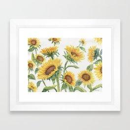 Blooming Sunflowers Framed Art Print