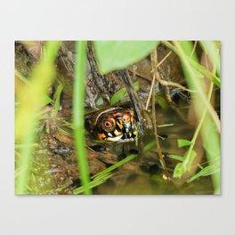 Box Turtle and Tadpoles Canvas Print