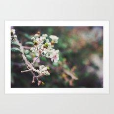Rubus Art Print