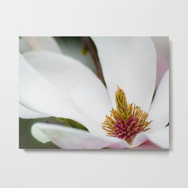 White Magnolia Macro Metal Print