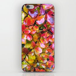 Barberry Fall Colors iPhone Skin