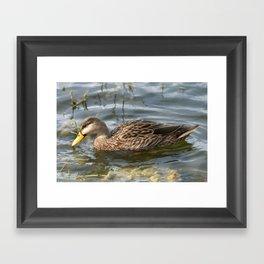 Mottled Duck Portrait Framed Art Print