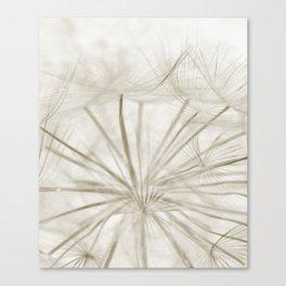 Dandelion Neutral Closeup Canvas Print