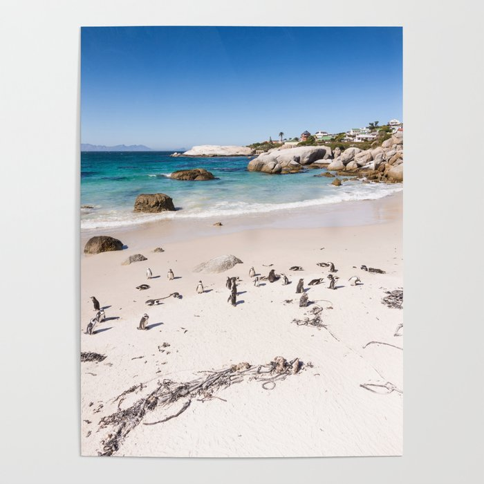 Penguins on Boulders Beach in Cape Town, South Africa Poster