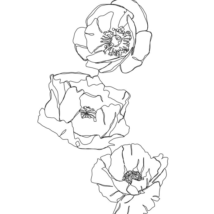 Botanical illustration line drawing - Poppies Duvet Cover