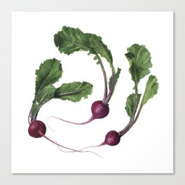 Scarlet Turnips Canvas Print