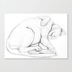 Cat II   /  Chat II   /  Gato II Canvas Print