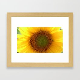 sunflower1 Framed Art Print