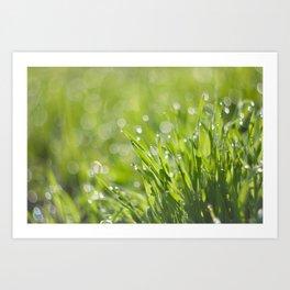 Morning Dew with Bokeh Art Print