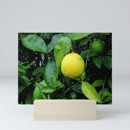 The Lemon Mini Art Print