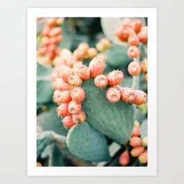 Opuntia - Ibiza - Nature photography Art Print