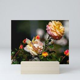 Das Farbenspiel der Rosen Mini Art Print