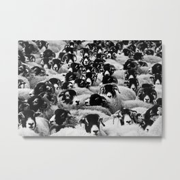 Herd of Sheep Metal Print