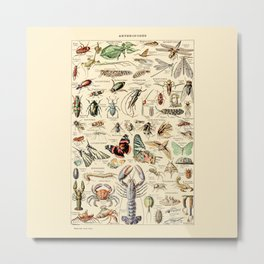 Vintage Insect Identification Chart // Arthropodes by Adolphe Millot 19th Century Science Artwork Metal Print