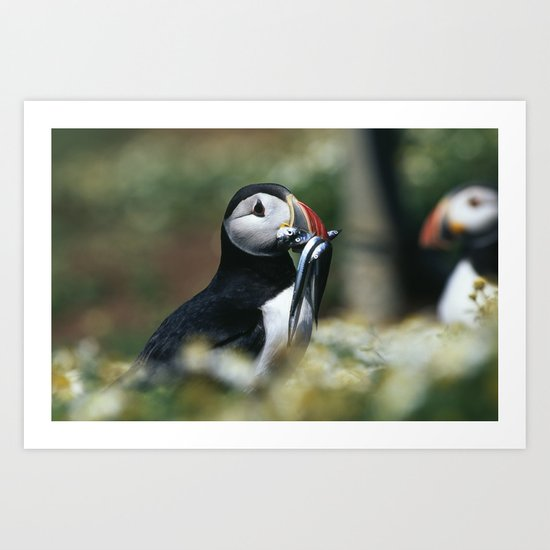 ATLANTIC PUFFIN WITH SANDEELS Art Print