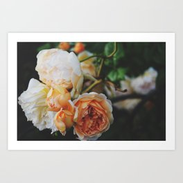 Roses for Diana Art Print