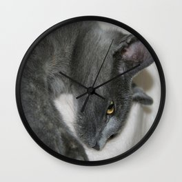 Close Up Portrait Of A Relaxed Grey Cat  Wall Clock