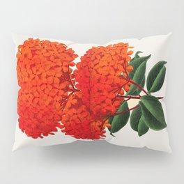 Vintage Scientific Flower Illustration Large Red Flowers Large Orange Petals Pillow Sham