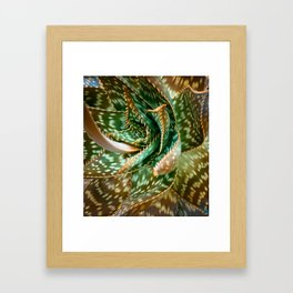 Aloe Saponaria, Soap Aloe Maculata Framed Art Print