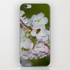 Cherry Blossoms and Bee iPhone Skin