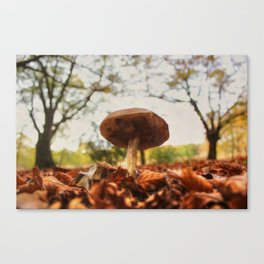As low as the leaves, as tall as the trees Canvas Print