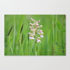 Wild orchid - untouched photography Canvas Print