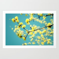 Yellow Spring blossoms Art Print