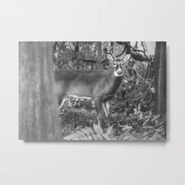 A Deer in Headlights Metal Print