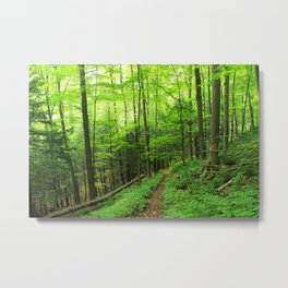Forest 6 Metal Print
