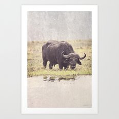 Buffalo from Botswana Art Print