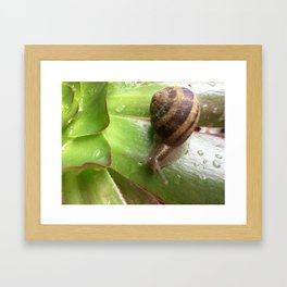 Snail on a Mission Framed Art Print