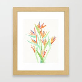 Birds of Paradise ~ tropical bouquet Framed Art Print