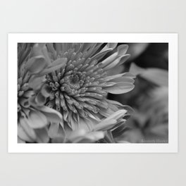 Blooming B&W Art Print