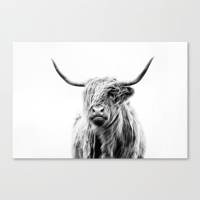 portrait of a highland cow (horizontal) Canvas Print