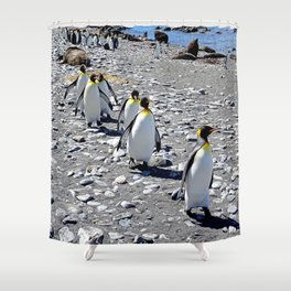King Penguins returning to the colony Shower Curtain