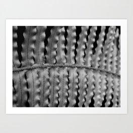 Crinkle Fern Art Print