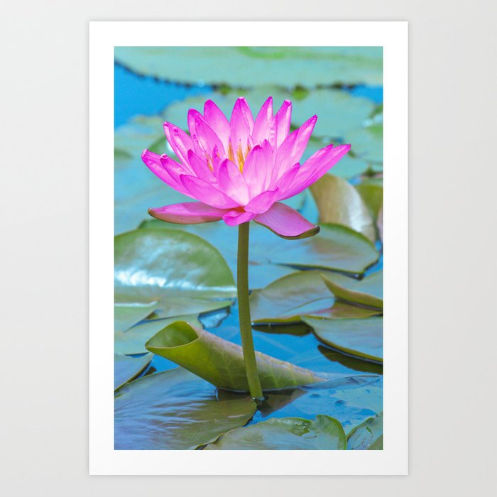 e51f6ad85ae39f Pink Water Lily Flower - Nature Photography Art Print by zuryart   Society6